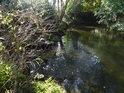 Potok Brlenka posiluje vody Metuje pod Velkým Poříčím.