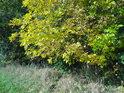 Dvojí barva podzimu na levém břehu Metuje mezi Velkým a Malým Poříčím.