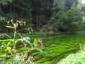 Netýkavka žláznatá již ztrácí na síle, kdežto vodní tráva v Metuji zažívá projasněné období.