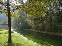 Travou prorostlá podzimní Metuje v Bražci.
