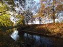 Část břehu a listí je osvětlená podzimním Sluncem, část listí už leží na zemi, či odplula do Labe.