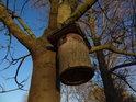 Ptačí budka Sluncem osvětlená v ptačím parku u Josefova.