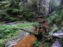 Pahýl stromu přes Metuji slatinné barvy.