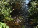 Již pod Adršpachem se v Metuji začínají objevovat vodní trávy.