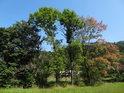 Stromy obklopená Metuje v Javoru.