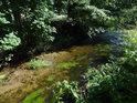 Vegetace kolem Metuje i vodní rostlinstvo na dně.